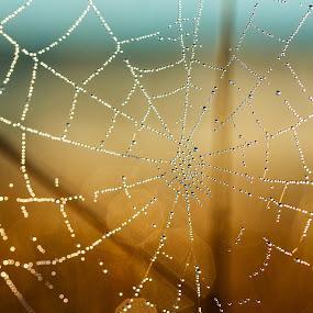 V by Roger Fanner - Nature Up Close Webs ( water, sky, blue, roger fanner, grass, dew, brown, web )