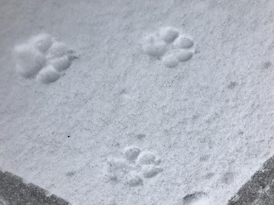A spasso sula neve di carla_gioco