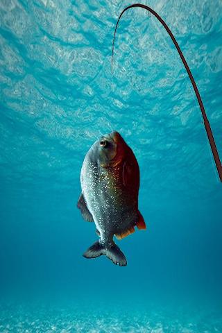 Fishing Challenge Superstars
