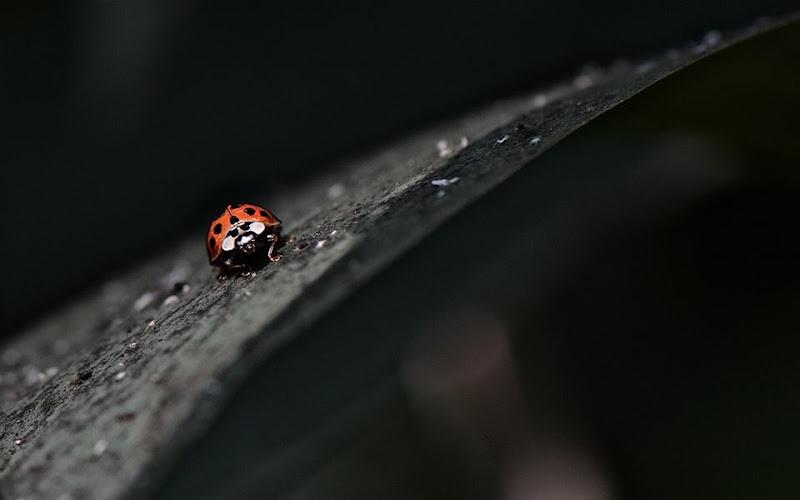 Piccola piccola... di beatrice_maccelli