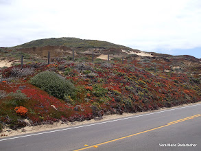Photo: Brilliant reds along Highway One, Big Sur