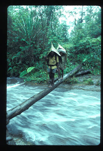 Papua. Tribes Baliem Valley Time Travel. The cook and porter crossing on a log. The Papuan have fantastic balance