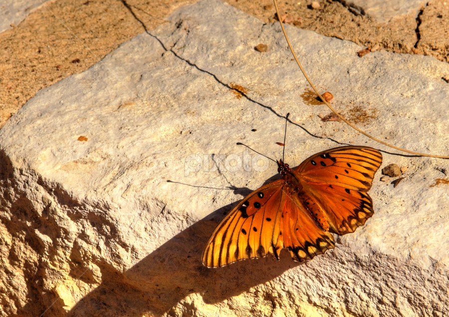 Catching the Rays by Dave Files - Animals Insects & Spiders ( pwcinsectsandspiders, butterfly, nature, wfc )