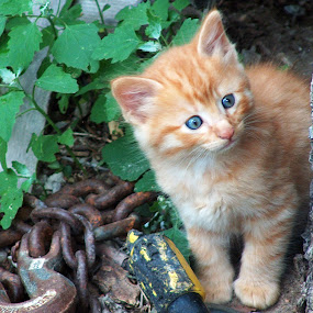 by R Sly - Animals - Cats Kittens (  )