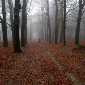 a foggy winterday in the woods by Hilda van der Lee - Landscapes Weather (  )