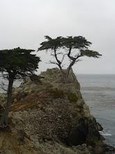 Photo: Lone Cypress