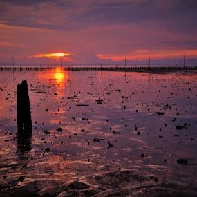 Sunset reflections by Greg Crisostomo - Landscapes Sunsets & Sunrises ( shore, sunset, sticks, low tide, stones )