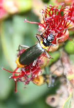 Photo: Year 2 Day 151 - Insect on a Plant