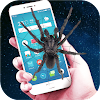 Real Spider In phone APK