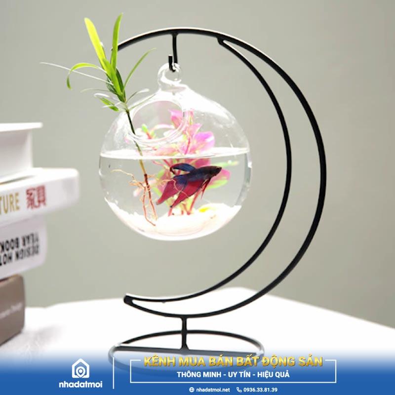 mệnh thủy nuôi cá gì
