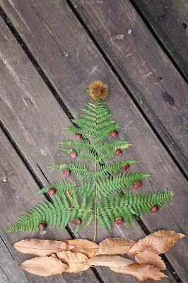 L'albero di Autunno di Picchiolino
