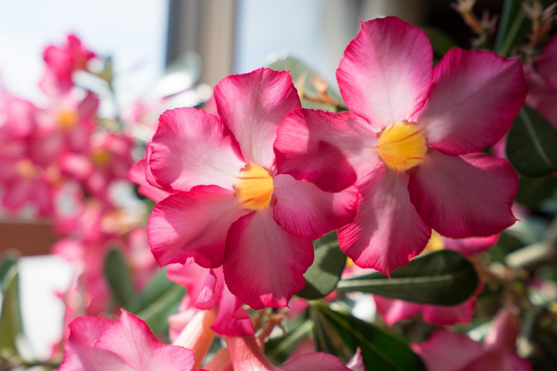 艶やかな花弁