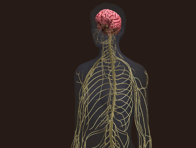 Ежевик гребенчатый – природный помощник для нашего мозга