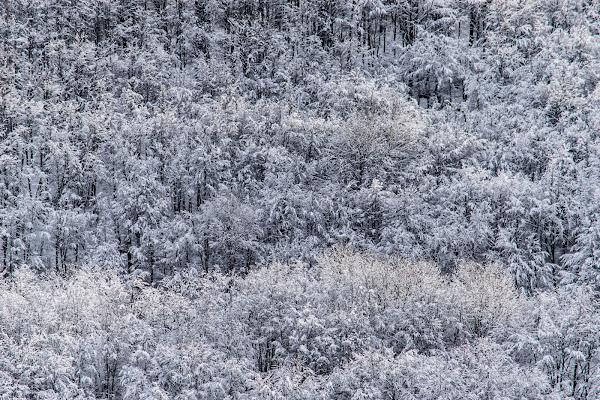 Leggiadria del fiocco di neve  di Maria Laura Catalogna
