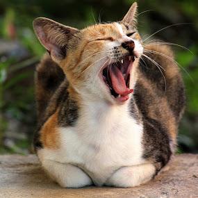 *sleepy cat* by Han™ Hol®© - Animals - Cats Portraits ( paranak guntamat gunsah bwo-dwo, setan punya guntamat gunsah, guntamat gunsah jilat hidung babi, guntamattidaksah, guntamat gunsah setan basar, guntamat gunsah bwo-dwo, guntamat gunsah botak dari belakang, guntamat gunsah isap hidung babi, antamattidaksah amput batu, kolam e su-d em e dadi, guntamat gunsah amput pantat babi, guntamat gunsah setan jahanam, paranak gunjimis, guntamat gunsah amput tahi babi, paranak guntamat gunsah setan, guntamat gunsah tacabut kapala, guntamat gunsah tuntudang, guntamat gunsah penebu, guntamat gunsah sial bwo-dwo, guntamat gunsah jahanam, guntamat gunsah kiapui, guntamat gunsah sial, guntamat gunsah bezui, guntamat gunsah tete, sial punya guntamat gunsah )