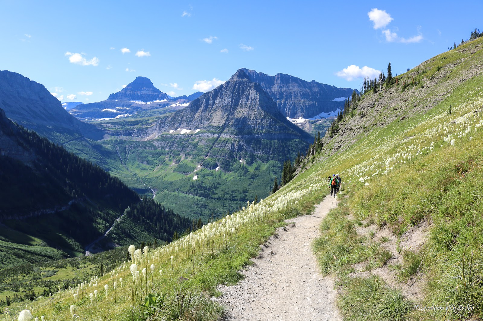 A dirt path meanders through green grass dotted with bear grass.  Mountain peaks line the horizon speckled with snow.