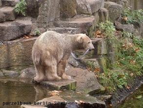 Photo: Knut hat ihn :-)