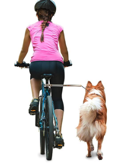 person with dog on bike leash