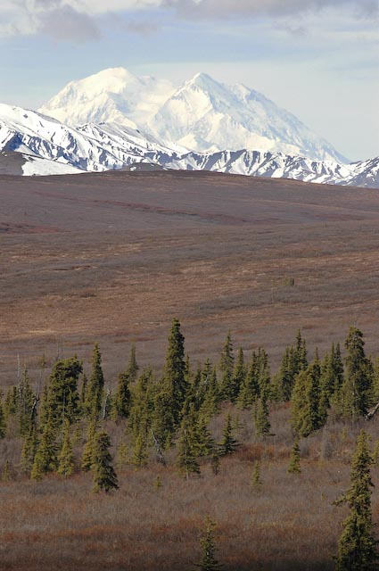 We saw Mt. Denali itself on one of our last days!