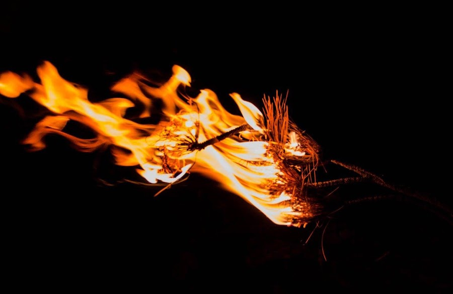 Burning pine needles by Martha Irvin - Abstract Fire & Fireworks
