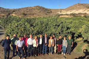 El PSOE pide al Gobierno protecci�n para las naranjas almerienses