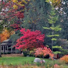 Autumn At The Japanese Cultural Center by Howard Sharper - City,  Street & Park  City Parks ( parks, autumn colors, cityscape, autumn leaves, landscape,  )