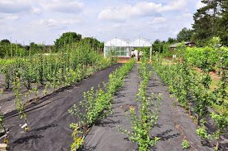 Photo: Jonge fruitboompjes RHS gardens Wisley
