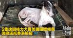 5隻逸園格力犬獲美國團體領養 傍晚送抵香港檢疫