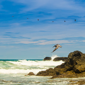 Jaco Beauty by James Woodward - Landscapes Beaches ( jaco, nature, beach, pelican, costa rica )