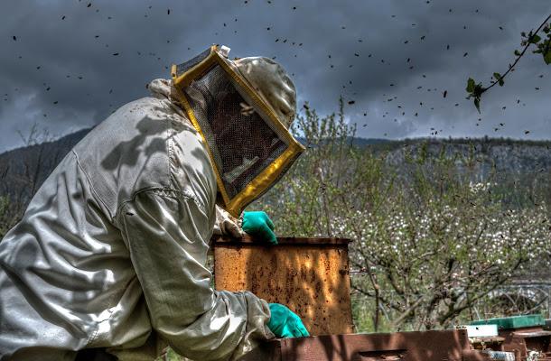 L'apicoltore di Moreno re