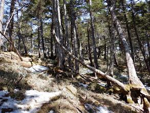 樹林帯となり笹が薄くなる