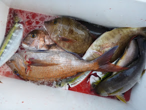 Photo: 戸田さんの釣果。・・・いまいちでした。