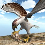 American Falcon Wild Sim 2016