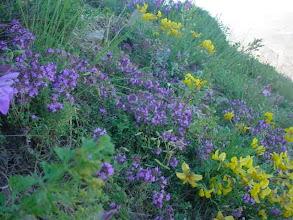 Photo: Doğada sayısız yararlı bitki bulunur.