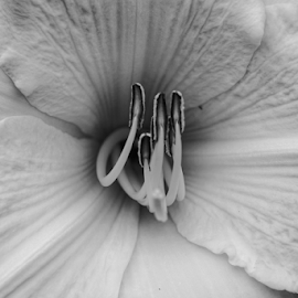 Center  by Todd Reynolds - Black & White Flowers & Plants