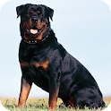 Rottweiler Dog Live Wallpaper icon