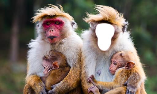 有趣的猴子的照片蒙太奇|玩攝影App免費|玩APPs