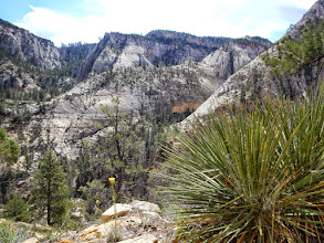 Photo: Yucca plant and the endless rock of Zion