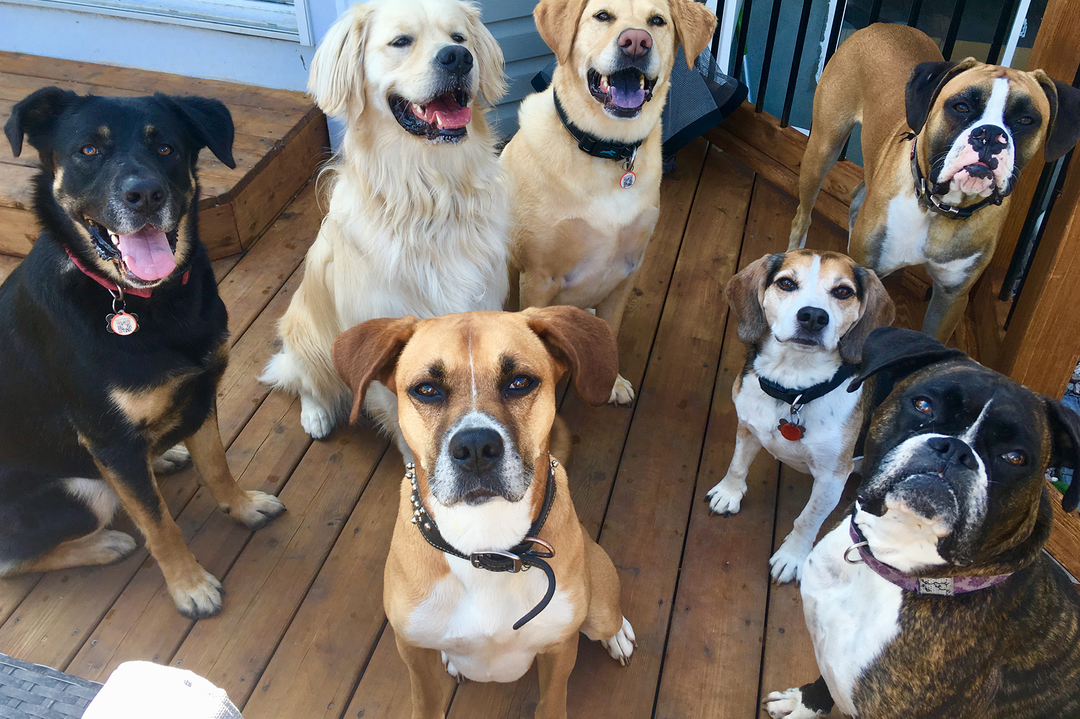 Seven dogs of various breeds sit and look into the camera.