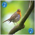 Birds sounds, ringtones birds icon