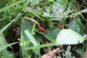 Photo: Red Jeans Frog