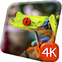 Colorful Frogs 4K Live Wallpap icon
