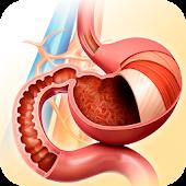 Tải My Stomach Anatomy miễn phí