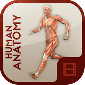 Anatomy Learning - Human Atlas