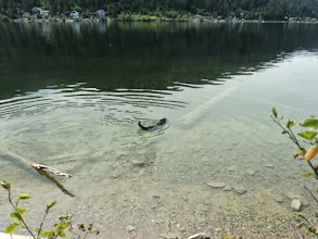 Photo: At lake level now. Letting Bailey cool off.