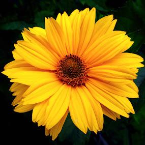 A Single Flower by Michael Krivoshey - Flowers Single Flower ( beautiful, yellow, flower,  )