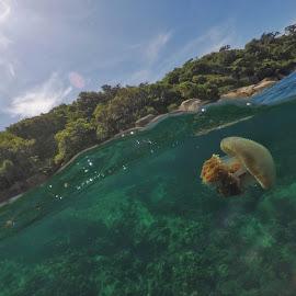 swim by Hafizi Ahmad - Animals Sea Creatures ( jellyfish )