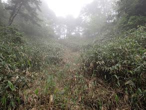 綺麗に刈られた笹道を登る(上が稜線)