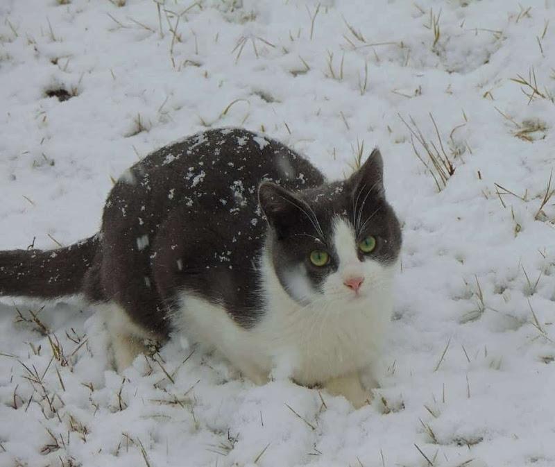 Il gatto delle nevi di giulia_juls