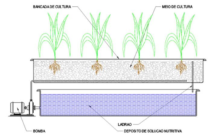 sub-irrigação hidroponia